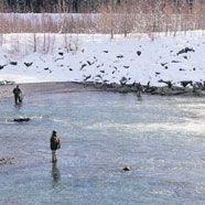 Feldkirch will das Gefälle der Ill im Mündungsgebiet auf ihre Mühlen lenken