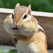 Die lustigsten Tierbilder