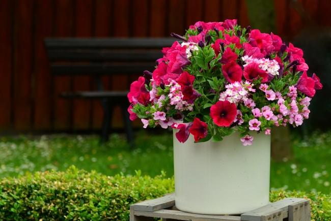 Kübel- und Balkonpflanzen