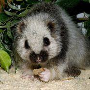 Tiergarten Schönbrunn bekommt Ratten als Bewohner