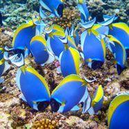 Faszinierende Unterwasserwelt: Die Top 10 der Tauchregionen