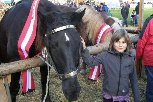 Partnersuche pferdeliebhaber
