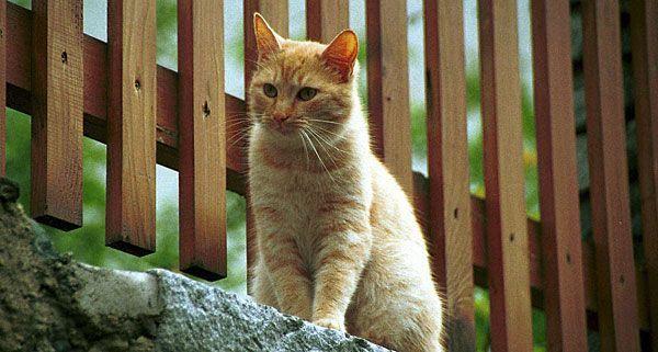 Eine wertvolle rote Katze wurde versehentlich überfahren - ihre Besitzerin klagte in Wiener Neustadt