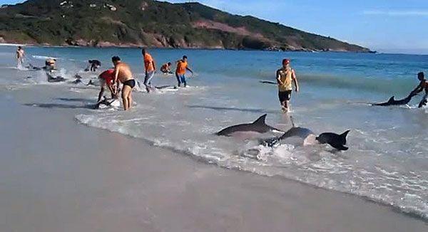 Passanten werden in Brasilien spontan zu Delfin-Rettern.