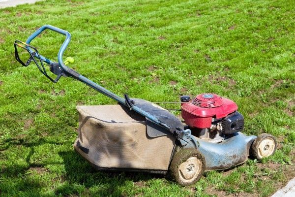 Herbert Geringer gibt sieben Tipps für einen schönen Rasen