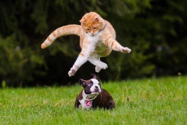 Warum Hunde Katzen fürchten « DiePresse.com