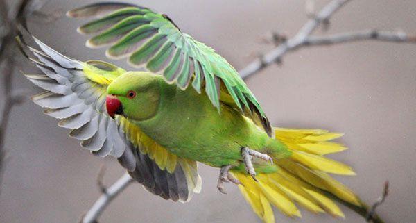 Der entflohene Papagei konnte seine Adresse auswendig.