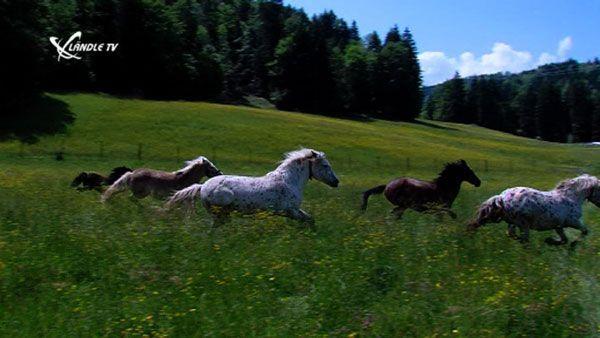 Tierhilfe Vorarlberg Gut Bozenau