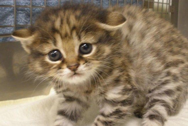 Zwei der Kätzchen wurden vorerst in einer Tierklinik untergebracht, eines fand bei einer Retterin ein neues Heim.