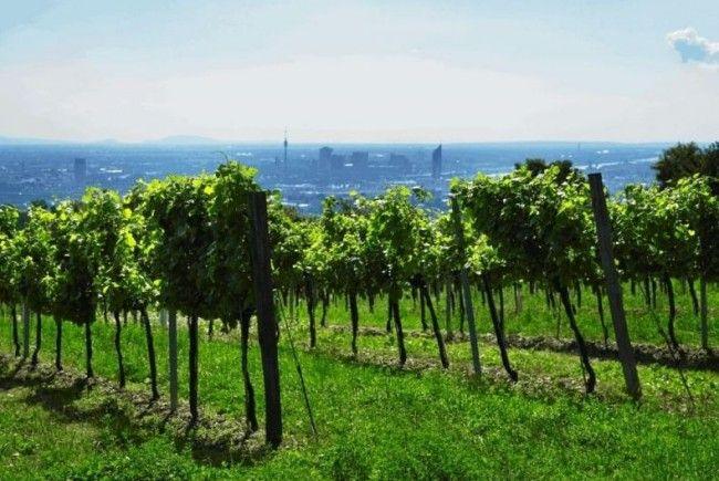 Am Wiener Weinfest können die besten Tropfen der Stadt verkostet werdenq