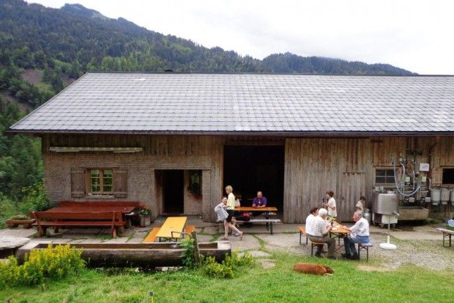 Alpe Buchen, Mellau