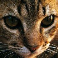 Kärnten: Tierquäler zog lebender Katze die Haut vom Schwanz