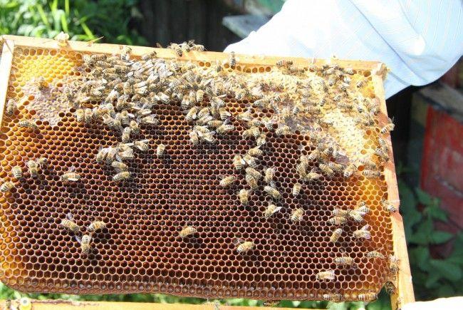 Die Bienen-Bestände in manchen Bezirken brachen dramatisch ein.