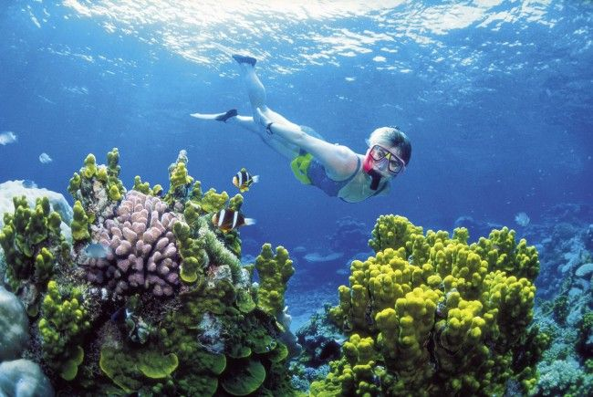 Naturjuwel Great Barrier Reef massiv vom Klimawandel bedroht.