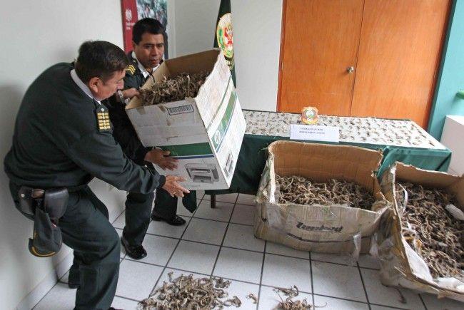 Drei Kisten gefüllt mit den toten Seepferdchen auf offener Straße zurückgelassen.