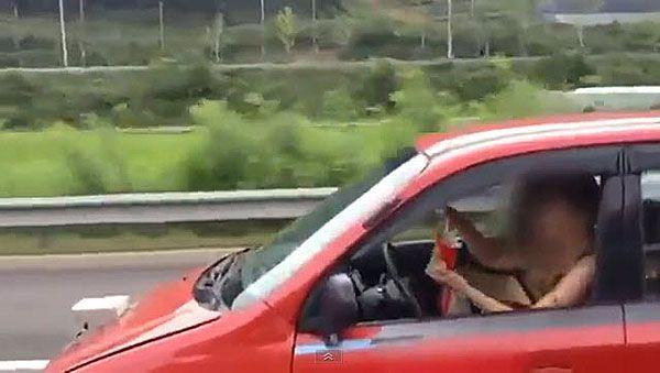 Lebensgefährlich: Essen und Autofahren gleichzeitig.