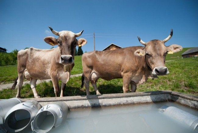 Eine Forderung: Wie viel Vieh auf der Alpe ist, soll stärker berücksichtigt werden.