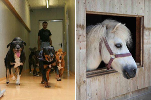 Hunde aus dem Vorarlberger Tierheim und Pferd Smokey vom Gut Bozenau.