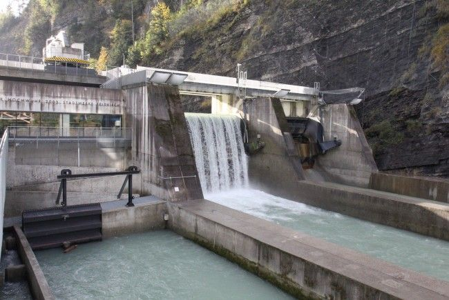 Fischzählung beim Kraftwerk Hochwuhr in Feldkirch.