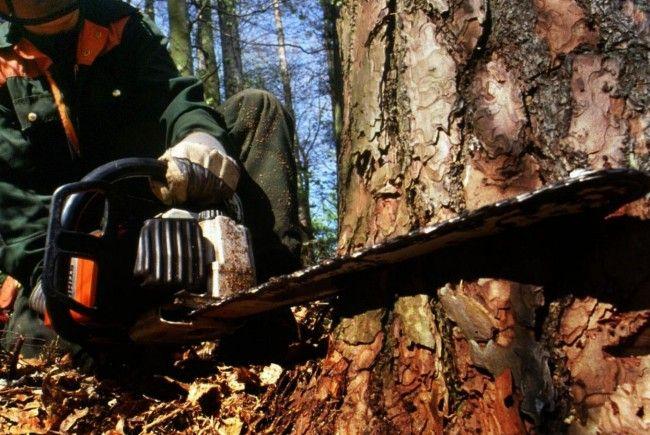 Beim Zersägen eines gefällten Baumes zog sich ein 51-jähriger Mann eine Verletzung zu.