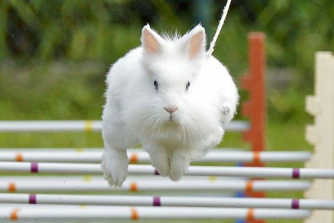 Die Kaninchen werden beim Hindernislauf an der Leine gehalten