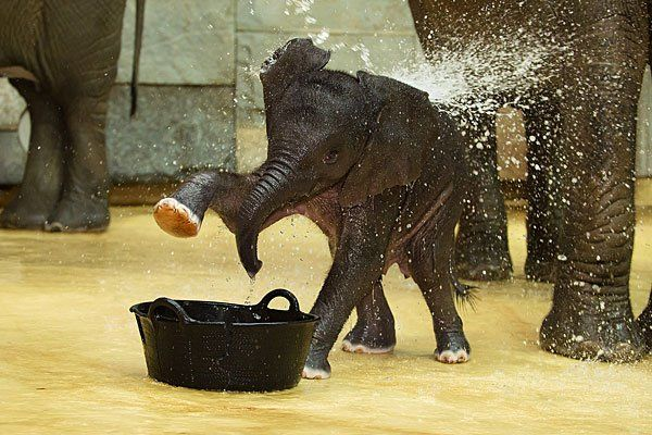 So süß spielt das Elefanten-Mädchen mit dem Wasser