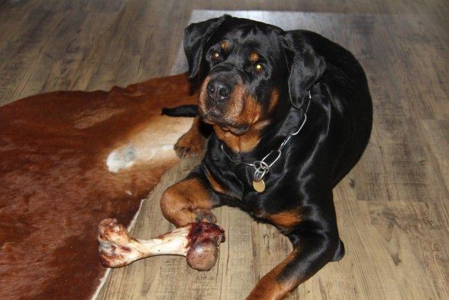 Raubüberfall in Dornbirn – Hund verteidigt seine Besitzerin