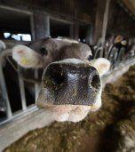 Hohe Eigenversorgung mit tierischen Lebensmitteln