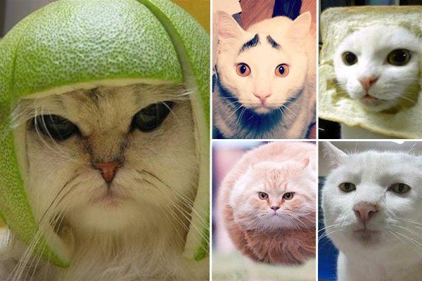 Katzen Memes