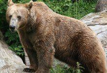 Wanderer in USA von Bär getötet