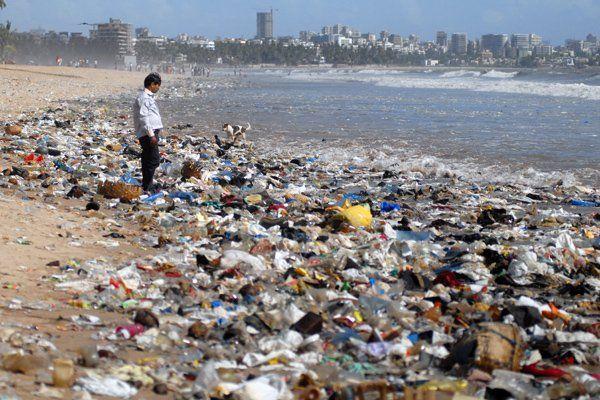 Verschmutzung der Meere belastet Tierwelt