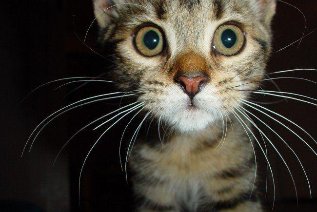 150 Katzen aus verwahrlostem Haus geborgen.