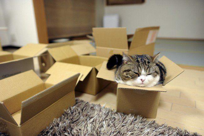 die antwort warum katzen boxen lieben vol at. Black Bedroom Furniture Sets. Home Design Ideas