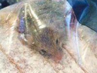 Kunde findet lebendige Maus in Aldi-Brot
