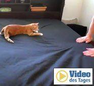 Bettenmachen mit tierischer Unterstützung