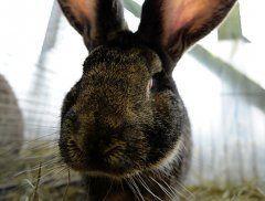 AHS-Lehrer in Horn tötete Kaninchen im Biologieunterricht