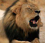 USA ermitteln gegen Cecils Todesschützen