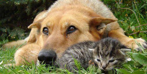 Sommer-Hitze: So schützen Sie Hund und Katze, wenn es heiß ist