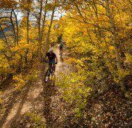 Forstwege bleiben weiter für Mountainbiker tabu
