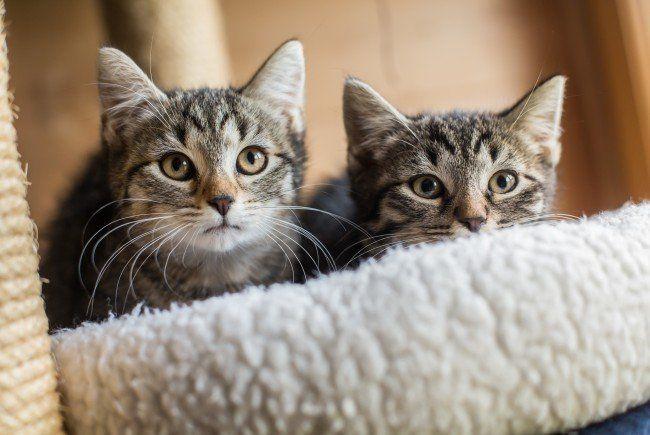 Katzen partnersuche
