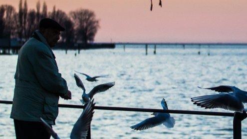 Klimawandel hinterlässt Spuren: Bodensee so warm wie noch nie