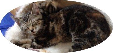 Katze Lilly in Feldkirch – Nofels vermisst