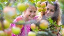 Russland vernichtet 178 Tonnen Äpfel