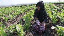 Indonesien: Drastische Strafen für Missbrauch
