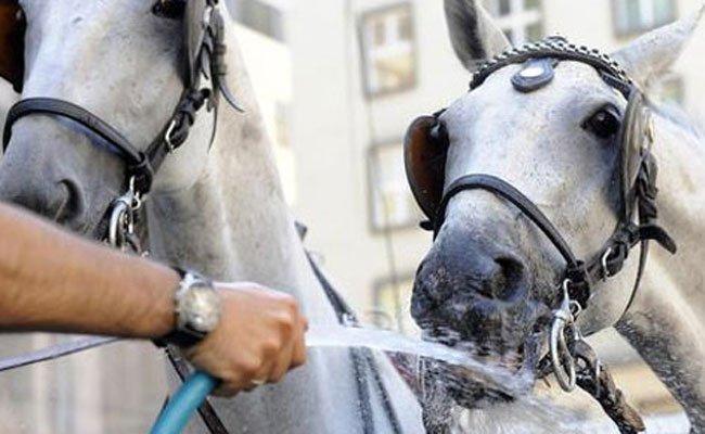 Hitzige Debatte um Wiens Fiaker-Pferde.