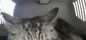 Katzenoma sucht neues Plätzchen!