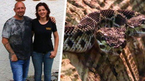 Die Hydra aus dem Allgäuer Zoo: Klapperschlange mit zwei Köpfen