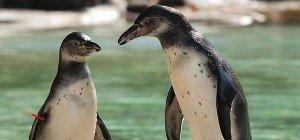17.000 Tiere im Londoner Zoo werden gewogen