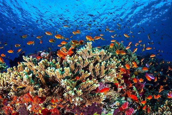 Das Great Barrier Reef hat laut Marineparkbehörde noch eine Chance.