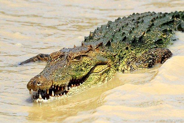 In Sri Lanka sind Kontakte mit Krokodilen keine Seltenheit